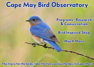 Cape May Bird Observatory