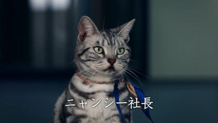 ワイモバイル CM 猫