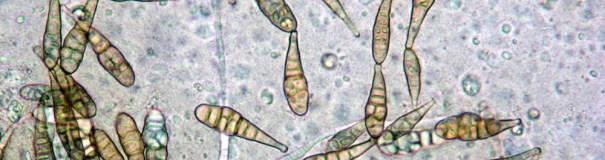 Mycology1