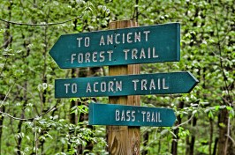 Ancient Forest Sign