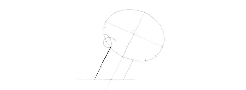 largura do maxilar do desenho do crânio