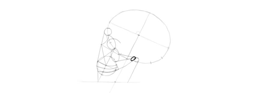 desenho detalhes da articulação da mandíbula