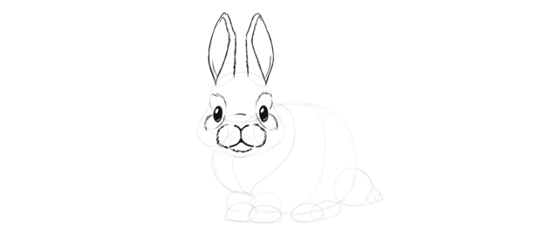 bunny ears detailed