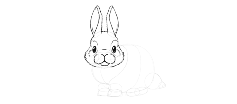 bunny head detailed