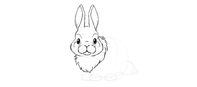 bunny fluffy neck