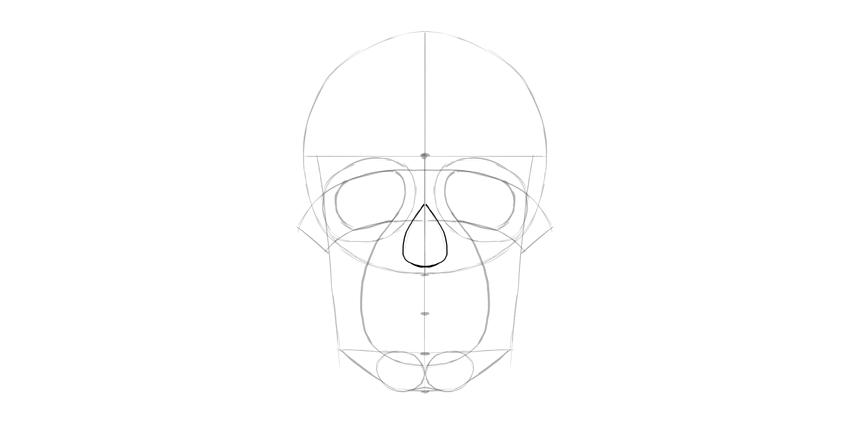 forma básica do nariz do crânio humano