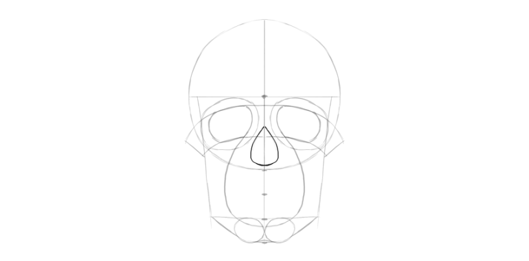 human skull nose basic shape