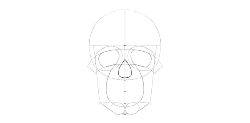 human skull nose basic shape