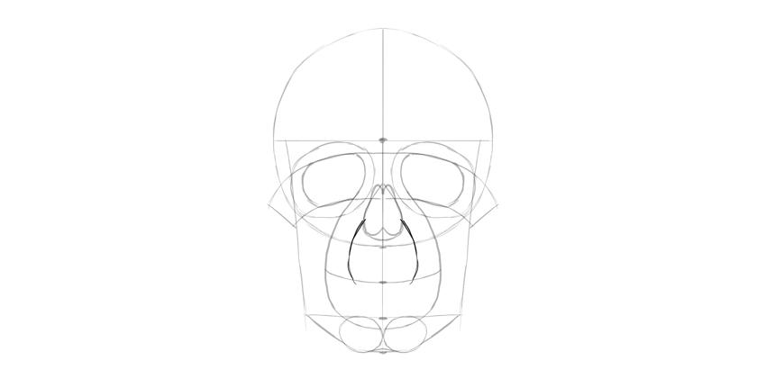 área da boca superior do crânio humano