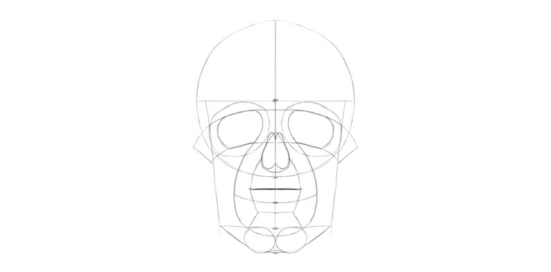 human skull upper teeth