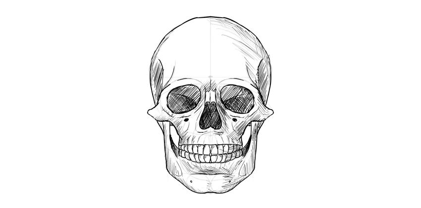 crânio humano sombreado