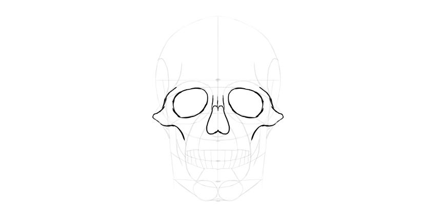 contorno do nariz crânio humano