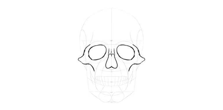 human skull nose outline