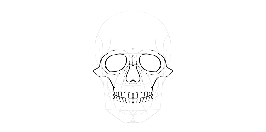contorno de dentes do crânio humano