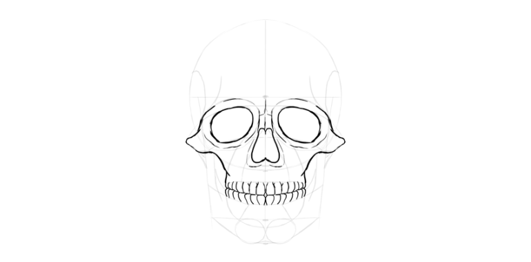human skull teeth outline