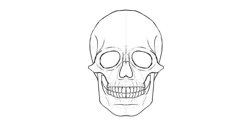 contorno do crânio crânio humano