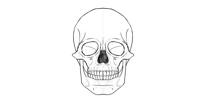 nariz humano crânio sombreado