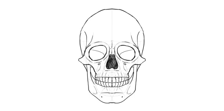human skull nose shaded