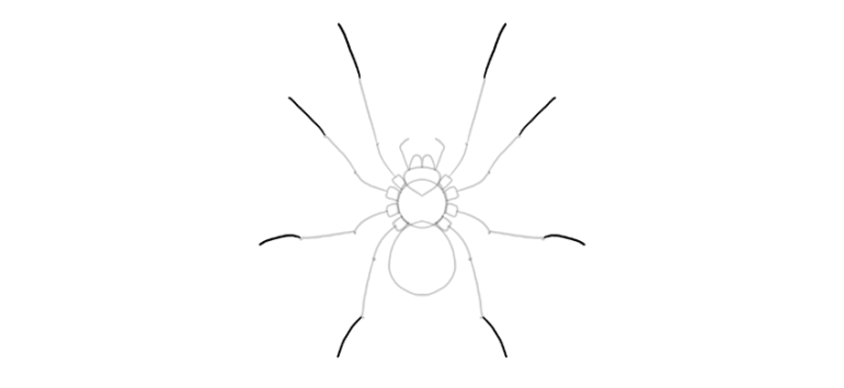 spider drawing end of the legs
