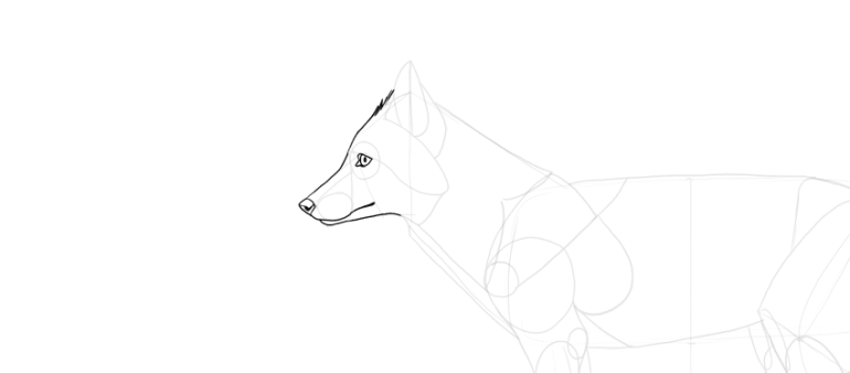 draw fox face