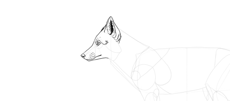 draw detailed fox ear