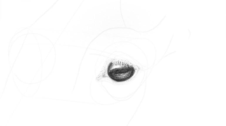 horse eye realistic shine