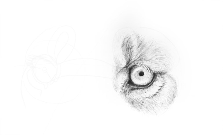 how to draw lion eye