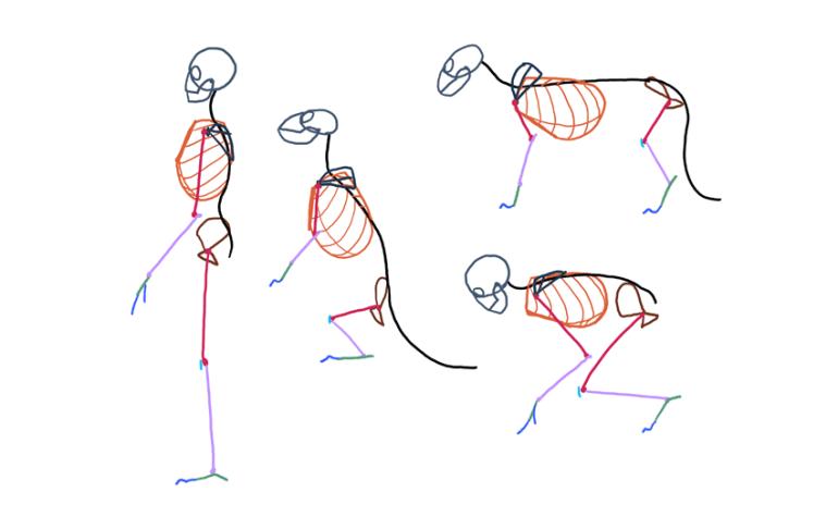 comparative anatomy furry