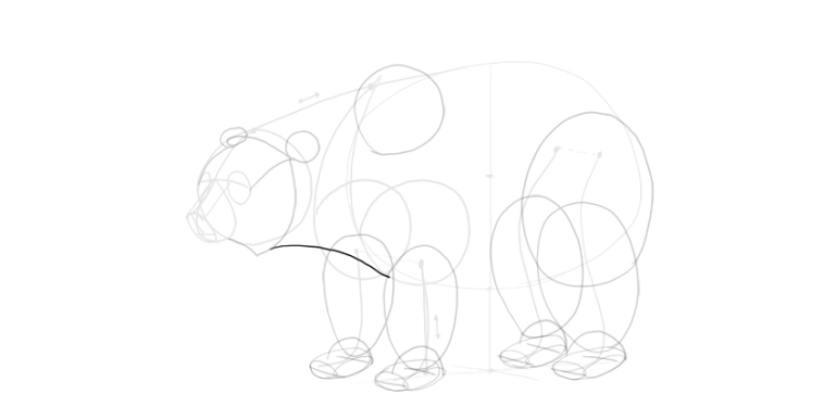 bear drawing neck shape