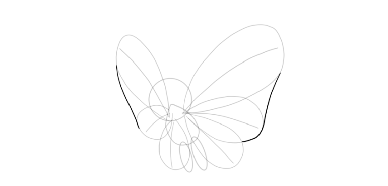 outline whole upper wings butterfree
