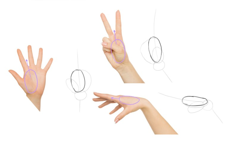 draw half of the palm