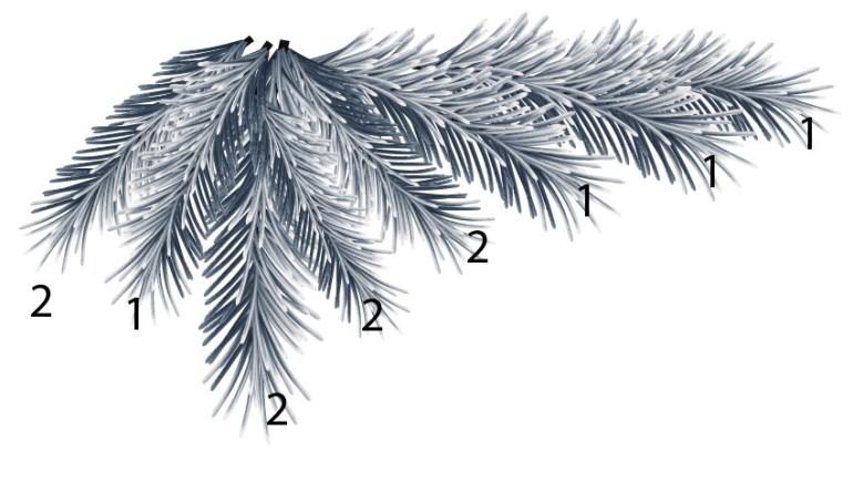 pine branches background design in Illustrator