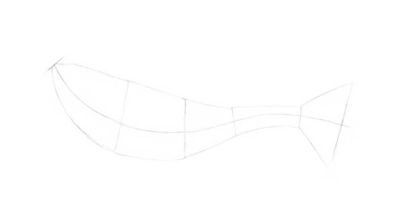 Adding the shapes of the tail and the caudal fin