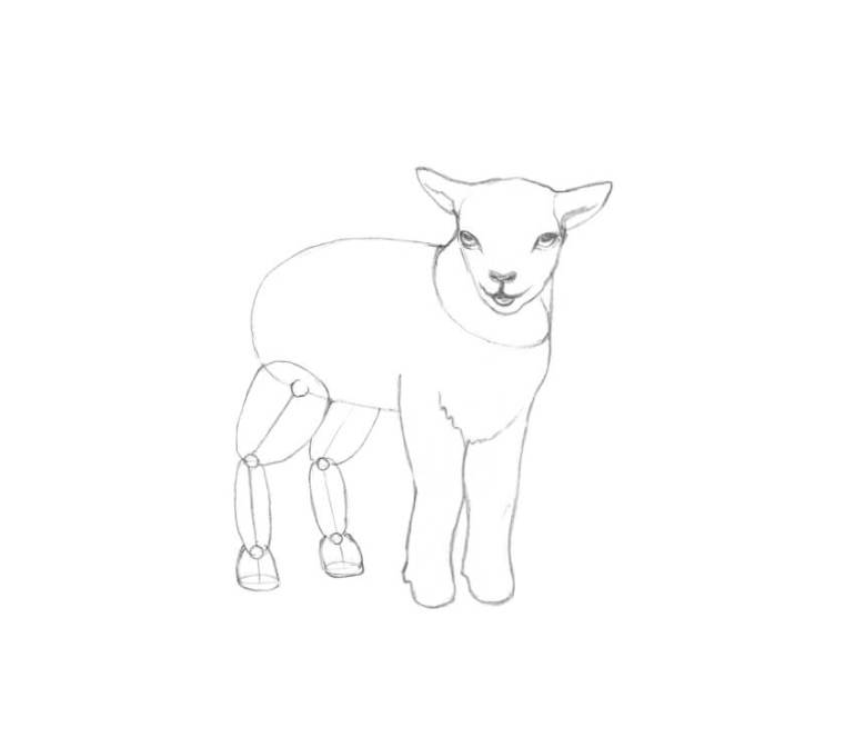 Refining the front legs of the lamb