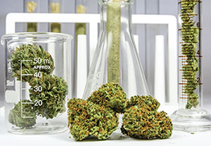 cannabis extraction in the lab