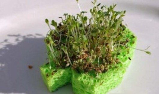 DIY Spongy Chia Pet | Crafts for Kids | PBS KIDS for Parents