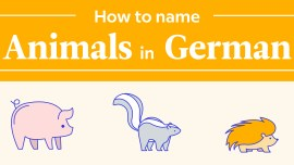 The German Animal Names Flowchart