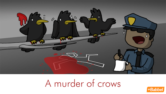 """""""Macello di corvi"""" e altri divertenti nomi collettivi in inglese"""
