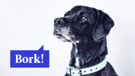 11 Dog Phrases You'll Need For Your Trip To The Park