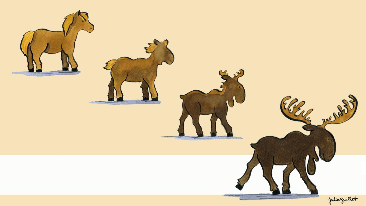 À l'origine, le mot joual vient de cheval, dont la prononciation a été modifiée