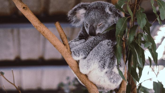 """Od """"selfie"""" po """"brekkie"""", czyli australijski slang dla początkujących"""