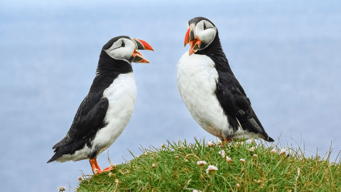 How Do You Make A Dictionary For Birds?