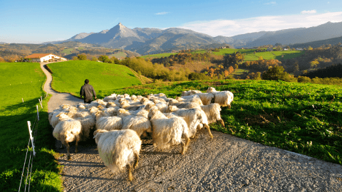 All About That Basque: The History And Mystery Of Europe's Most Isolated Language