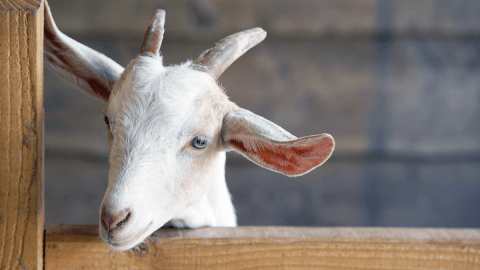 How To Talk About Animals In French