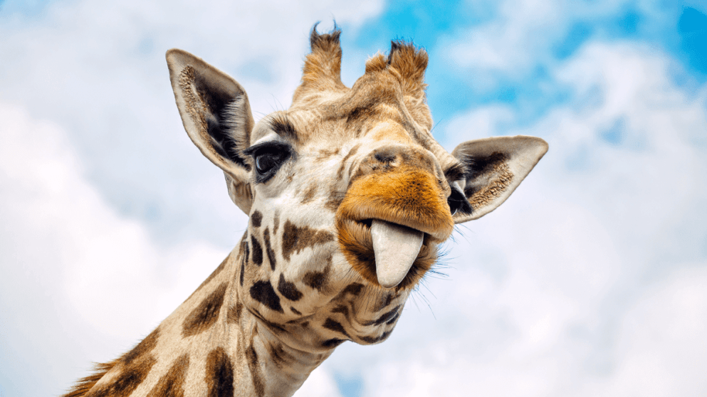 How To Talk About Animals In Dutch