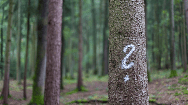 Quiz: How Much Do You Know About Punctuation?