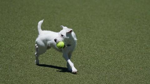I termini del tennis: glossario minimo per principianti