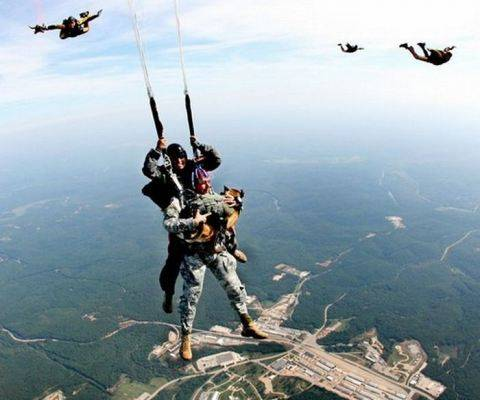 Airborne Dog Enjoying a Tandem Jump
