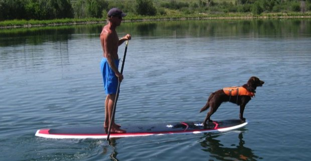 A Man, a Dog and their Paddle Board