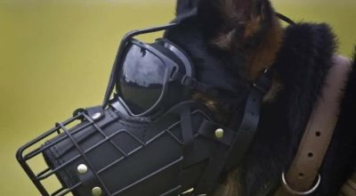 Watch: Release the Dogs of War